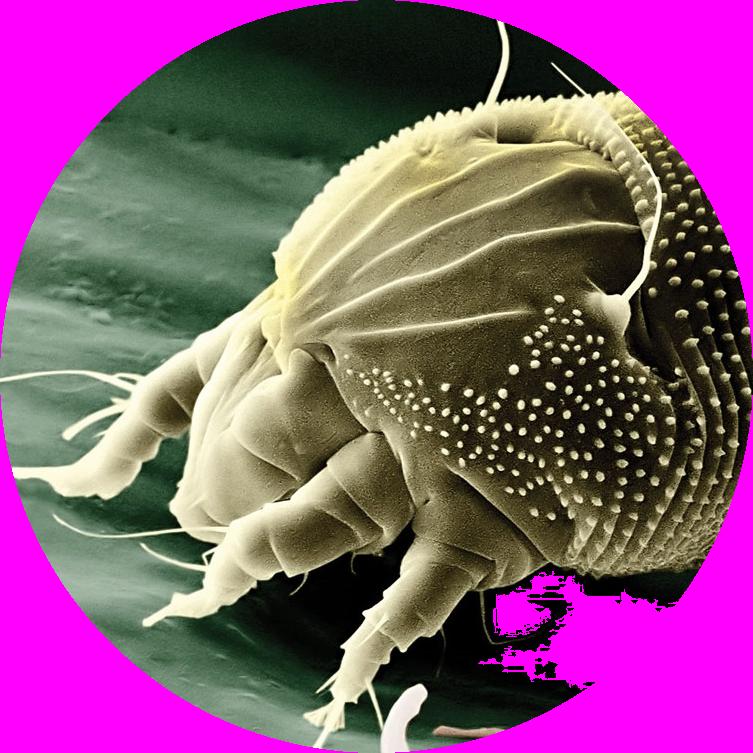 co zredukuje ilość pasożytów